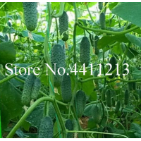 Cucumber 100 pcs. Japanese mini Cucumber Vegetable for home NO-GMO vegetables for home and garden planting easy to grow